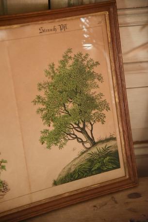 アンティーク  アートフレーム  フランス  ポスター  額絵